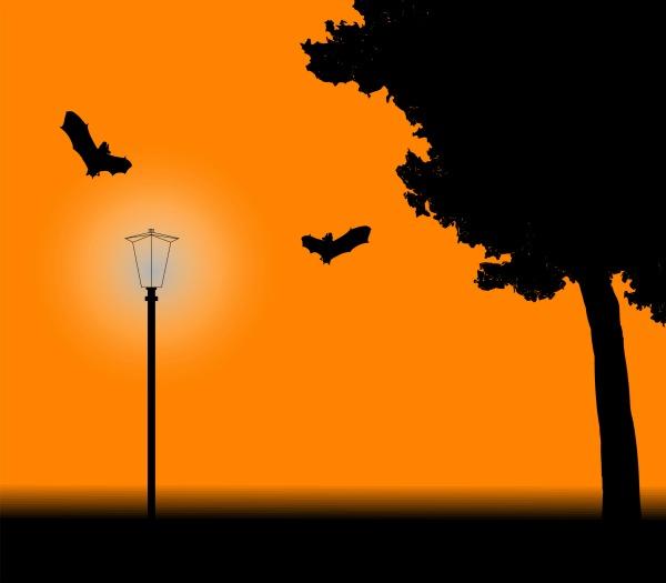 Bats flying in an orange sky