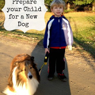 How To Prepare Your Child For A New Dog