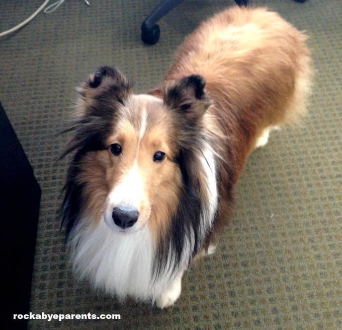 How to Prepare your Child for a New Dog - rockabyeparents.com