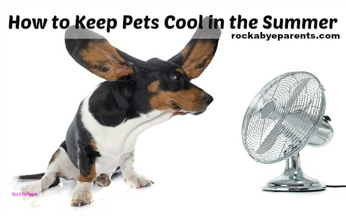 How to Keep Pets Cool on Hot Days