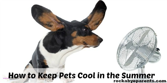 How to Keep Pets Cool without AC