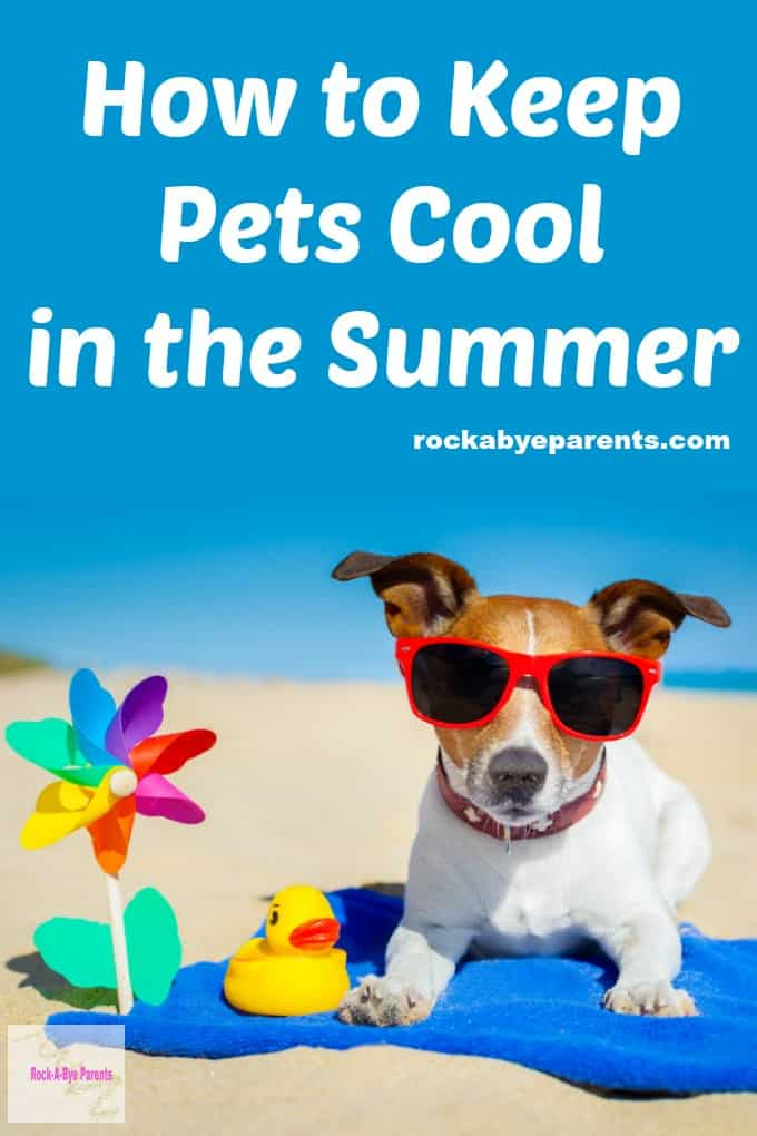 How to Keep Pets Cool in the Summer